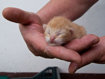Mão do gatinho Foto de Stock