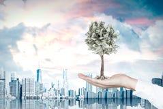 Mão do homem de negócios s e uma árvore do dólar, cidade rendição 3d Fotografia de Stock