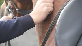 Mão do homem que afaga o pescoço do cavalo Braço das carícias masculinas do jóquei e garanhão marrom das trocas de carícias na na filme