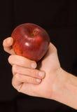 Mão do homem que prende uma maçã vermelha Imagem de Stock