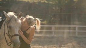 Mão do ` s da mulher que afaga o cavalo vídeos de arquivo