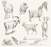 Mão do vetor da cabra tirada Imagem de Stock
