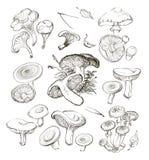 Mão do vetor que tira um grupo de cogumelos Foto de Stock