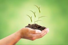 Mão e árvore com conceito do ambiente imagem de stock