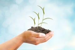 Mão e árvore com conceito do sucesso comercial foto de stock royalty free