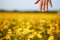 A mão e a flor da mulher Imagem de Stock Royalty Free