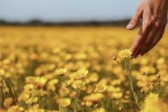A mão e a flor da mulher Fotografia de Stock