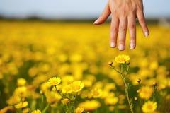 A mão e a flor da mulher Fotos de Stock