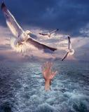Mão e gaivotas Fotografia de Stock Royalty Free
