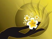 Mão e hibiscus branco de Buddha Imagem de Stock