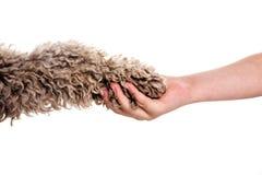 Mão e paw1 Imagens de Stock