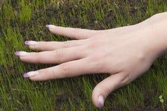 Mão em sprouts Imagens de Stock Royalty Free