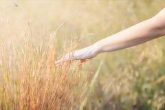 Mão em um campo da erva fotografia de stock