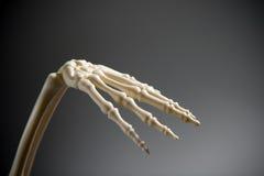 Mão esqueletal Imagens de Stock Royalty Free