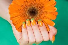 Mão fêmea bonita com tratamento de mãos francês Imagem de Stock
