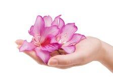 Mão fêmea com flor fotos de stock royalty free