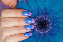 Mão fêmea com tratamento de mãos da cor do bi Fotografia de Stock