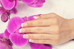 Mão fêmea com tratamento de mãos francês Imagem de Stock Royalty Free