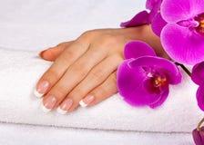 Mão fêmea com tratamento de mãos francês perfeito Foto de Stock Royalty Free