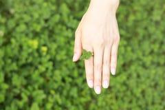 Mão fêmea em um anel do trevo de quatro folhas Foto de Stock Royalty Free