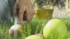 Mão fêmea que escolhe maçãs no jardim Close-up vídeos de arquivo