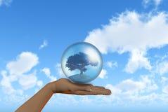 Mão fêmea que guarda a árvore no globo Imagens de Stock Royalty Free