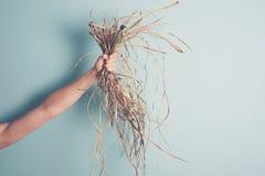 Mão fêmea que guarda a erva daninha fotos de stock royalty free