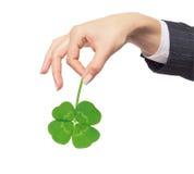 Mão fêmea que guarda a folha verde do trevo, isolada no branco Fotografia de Stock Royalty Free