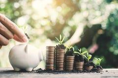 Mão fêmea que guarda o dinheiro na tabela no fundo da natureza imagens de stock royalty free