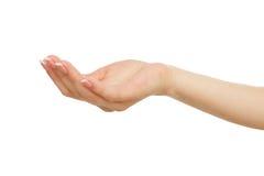 Mão fêmea que mantém a palma colocada vazia, colheita, entalhe fotografia de stock