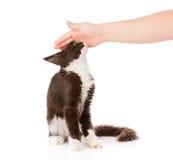 Mão fêmea que patting o gato Isolado no fundo branco Foto de Stock Royalty Free