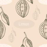 Mão gráfica teste padrão sem emenda tirado com limão Imagem de Stock