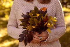 A mão guarda as folhas de outono amarelas Fotografia de Stock