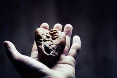 A mão guarda o âmbar Pedra de Sun à disposição no fundo branco A pessoa mostra o âmbar em uma mão Resina antiga com insetos Fotografia de Stock Royalty Free