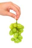 A mão guarda o grupo de uvas verdes maduras e suculentas Fotos de Stock Royalty Free