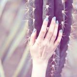 A mão guarda um grande cacto, conceito da beleza Art Contemporary foto de stock royalty free