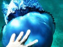 A mão humana do homem para medusa sob a água em um mar Imagens de Stock Royalty Free