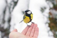 Mão humana que alimenta o pássaro Harmonia da natureza Imagem de Stock