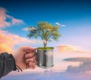 Mão humana que guarda a árvore perfeita imagem de stock royalty free