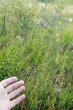 Mão humana que indica à Web grande do ` s da aranha com as gotas do orvalho no alvorecer fotografia de stock royalty free