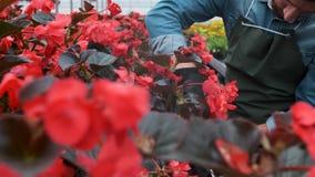 mão 4K que alcança para fora para tocar em plantas novas na grande estufa Indústria da agricultura ou da ciência vídeos de arquivo