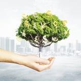 Mão masculina que guarda a árvore do dinheiro Foto de Stock