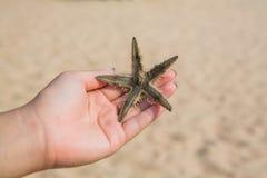 Mão molhada da mulher que guarda o vermelho estrela do mar de cinco pontos Fotos de Stock Royalty Free
