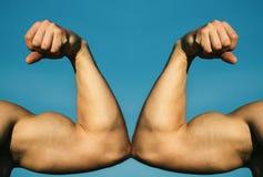 Mão muscular contra a mão forte Competi??o, compara??o da for?a CONTRA Luta duramente Conceito da sa?de Mão, braço do homem, fis fotos de stock royalty free