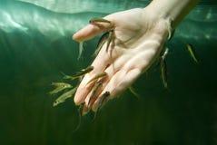 Mão na água com peixes. Procedimento dos termas Fotografia de Stock Royalty Free