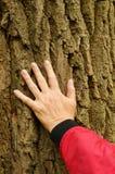 A mão na árvore Imagens de Stock Royalty Free