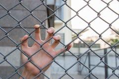 Mão na gaiola Foto de Stock Royalty Free