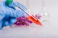 Mão na luva que guarda o tubo com extrato, trabalho no laboratório bioquímico Fotos de Stock Royalty Free