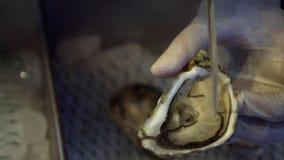 Mão na luva que Shucking a ostra crua fresca com a faca no restaurante video estoque