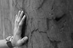 Mão no tronco do Redwood fotos de stock